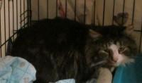 http://archive.iowapetalert.com//found_pet//Stray_cat.JPG